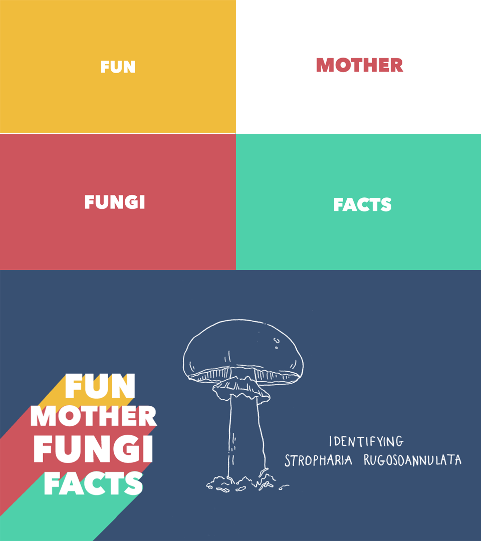 Screenshots of Fun Mother Fungi Facts